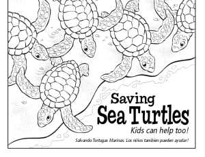 Florida Sea Turtle License Plate Projects Funded By The