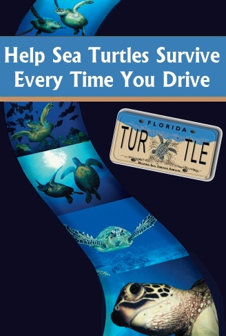 Help Sea Turtles Survive Every Time You Drive